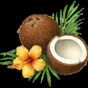 Coconut Oil - TheHealthyFat.pdf